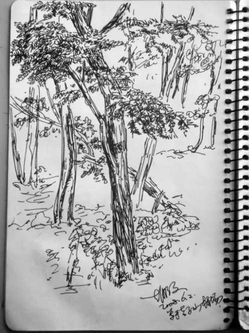 风景速写树木临摹