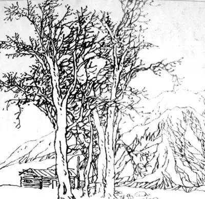 简单风景速写 风景速写丨超简单的树木画法
